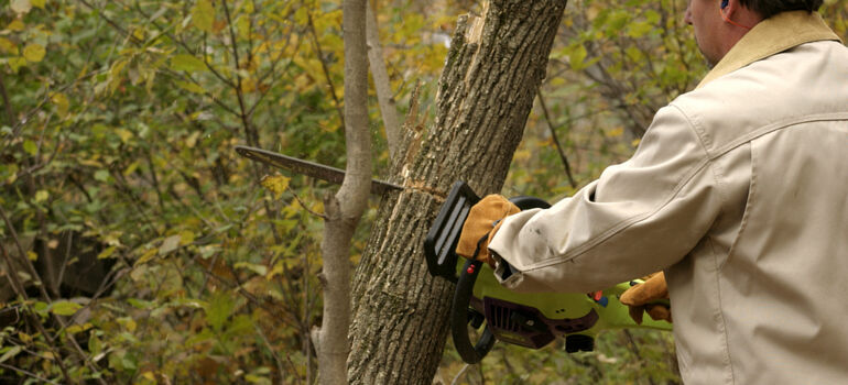 Chain Saw Recommendation Best Homestead Chain Saw